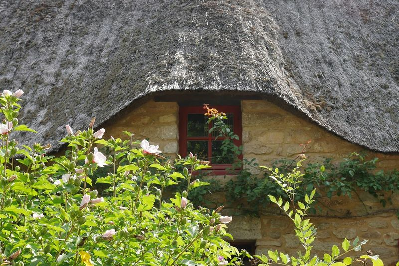 Chaumière de Kerhinet - Architecture House Growth Plant Nature Old Architecture Architecturephotography Architectureporn Bretagne Bretagnetourisme Cottage Old Town Village Travel Destinations Old House Architecturelovers Window French House Nature Roof Growth Plant Architecture