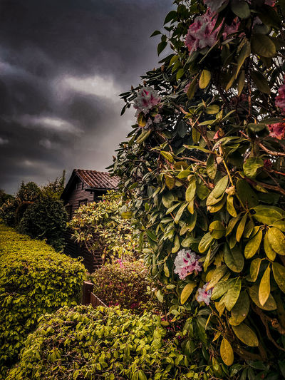 Flowering plants and tree by building against sky
