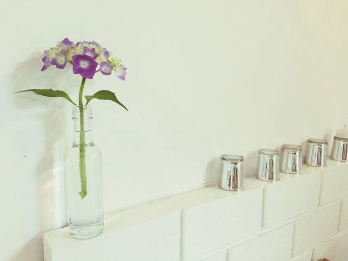 ヤマアジサイ カワイイ! Hydrangea Flowers_collection Flowers Enjoying Life 2枚目のあじさい