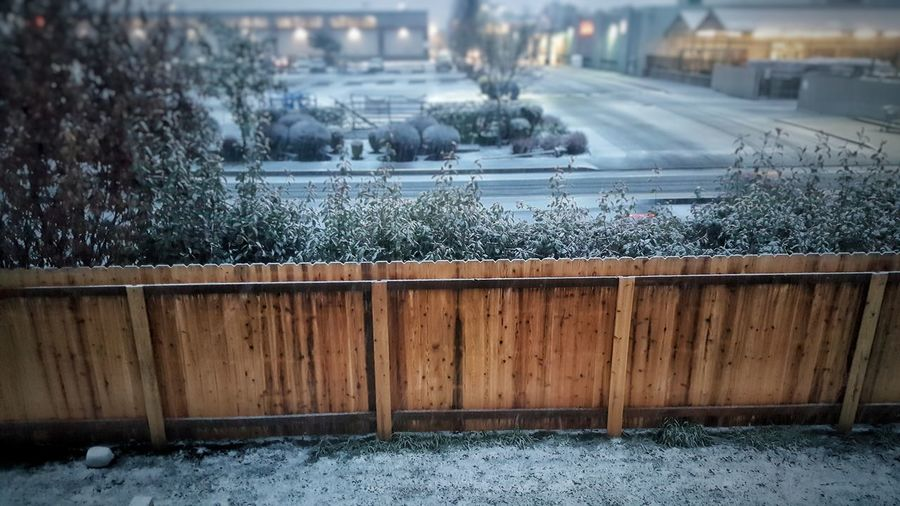 Snow covered plants by railing during winter