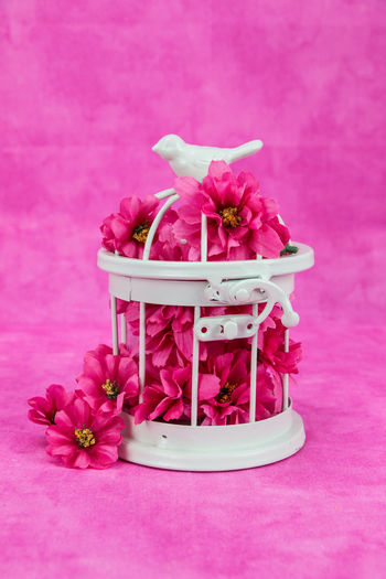 Pink in springtime Still Lives Beauty In Nature Bird Cage Close-up Day Flower Flower Head Fragility Freshness Indoors  Nature No People Periwinkle Petal Pink Pink Background Pink Color Purple Studio Shot Table