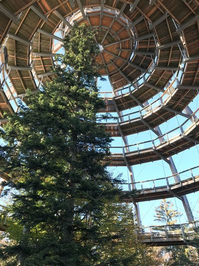 Tree inside the building Natureandbuilding Low Angle View Tree Plant Built Structure Architecture Day No People