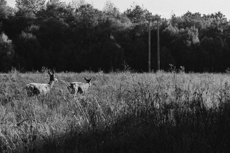 Run Grass Animal Themes Field Growth Nature Mammal Tree Grazing Outdoors No People Livestock Domestic Animals EyeEm Best Shots This Week On Eyeem Animals In The Wild Plant Sheep Beauty In Nature