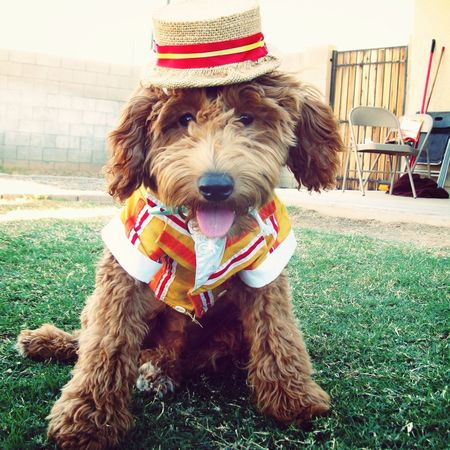 Halloween I Love My Dog Costume Mary Poppins