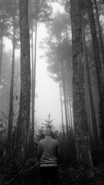 One Person Tree Nature Forest Lifestyles Fog People Real People Beauty In Nature Outdoors Adult Day Adults Only Leisure Activity Natural Beauty Beautiful Nature Nature Tree_collection  Alone Time Alone Winter Alone In The Dark Alone Boy Blackandwhite Black And White