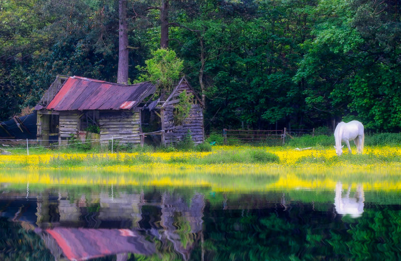 Horse by an old barn Plant Tree Water Built Structure Architecture Nature No People Green Color Lake Day Reflection Building Exterior Animal Land Animal Themes Beauty In Nature Grass Growth Outdoors