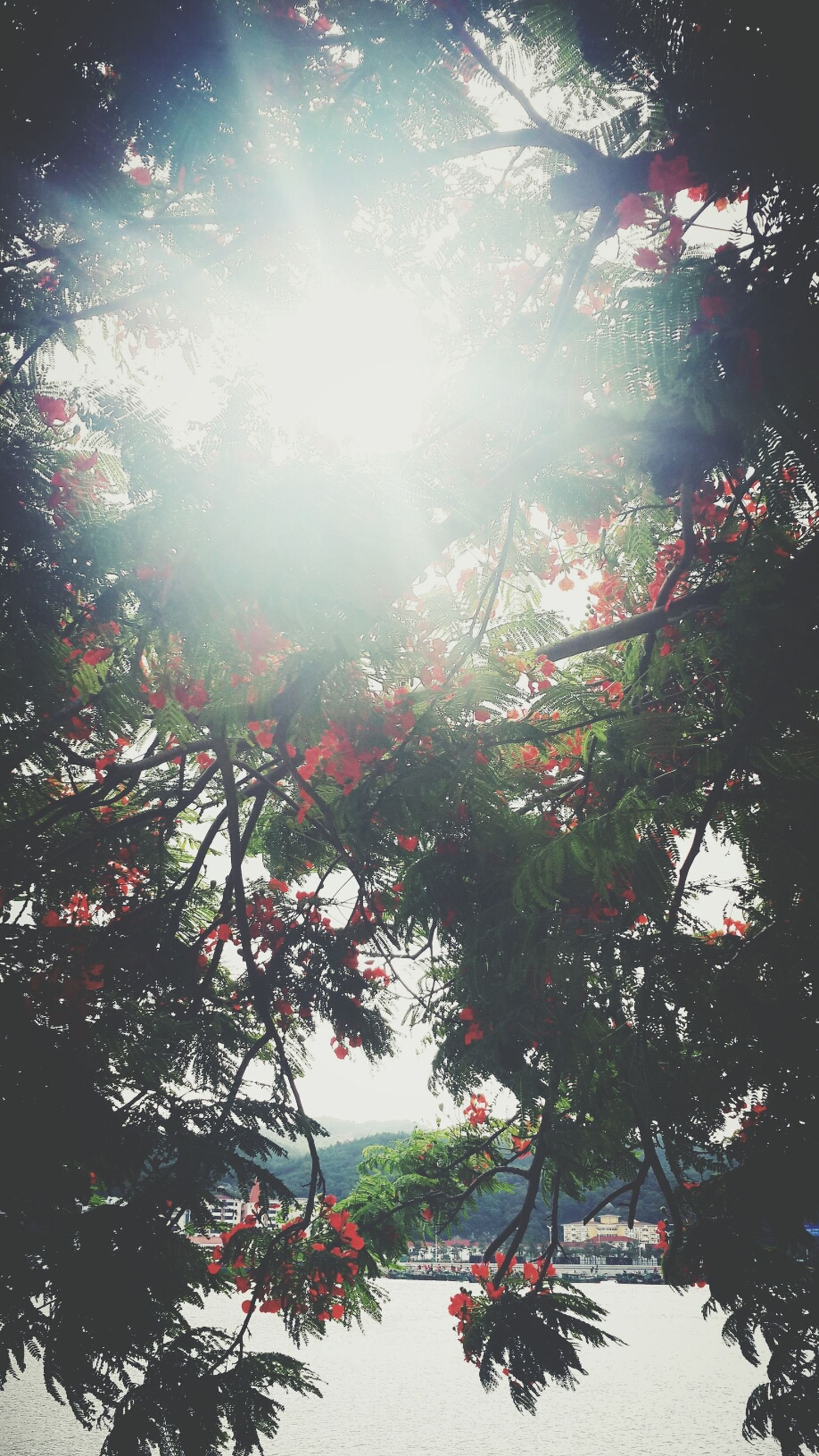 tree, low angle view, branch, growth, sun, sunlight, nature, beauty in nature, sky, sunbeam, lens flare, tranquility, outdoors, pink color, day, no people, leaf, built structure, clear sky, sunny