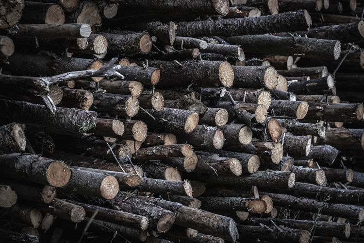Close-up image with a stack of tree trunks freshly harvested, seen as a background Tree Log Abundance Deforestation Environmental Issues Firewood Firewood Stack Forest Log Lumber Industry Nature Outdoors Stack Timber Tree Wood Wood - Material Woodpile