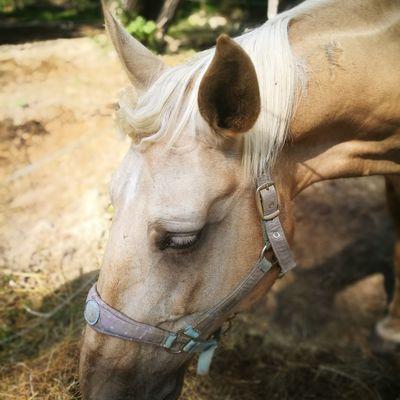 EyeEm Selects Tree Close-up Horse Horseback Riding