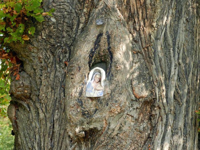 Eingewachsen Englischer Garten Marienbild München,Germany No People Park Tree Wood - Material