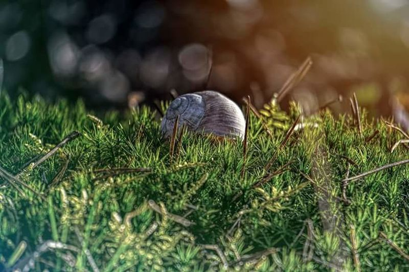Snail One Animal Grass Surface Level Nature Animal Animal Themes Animal Wildlife No People Outdoors snail Snail Snail🐌 Snails Snail Collection Snail House Snail Hiding Rain Rainy Days Rainy Day Grass Grassy Grass Area Snail Photography Snailhouse Snails🐌 Snail Closeup First Eyeem Photo