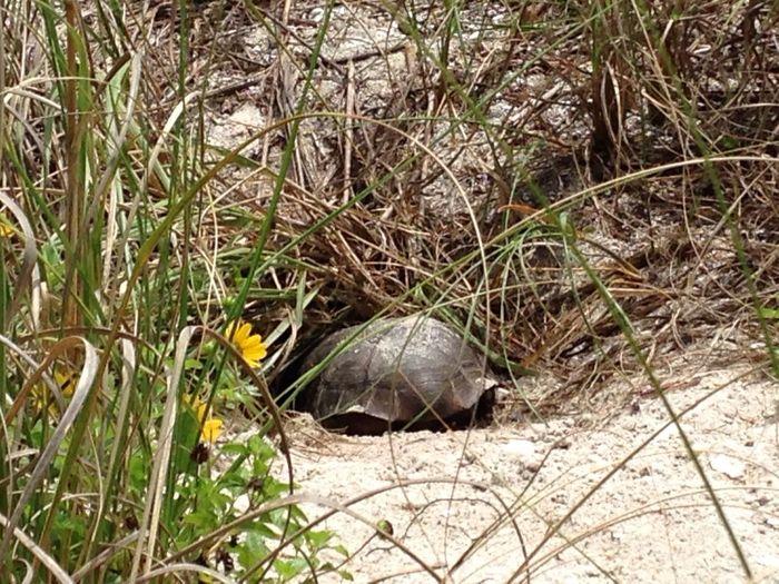 In freier Natur ... Florida