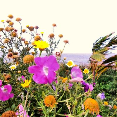 Flowers Nature Sea View Bahrain. Samsung Galaxy S4 Zoom