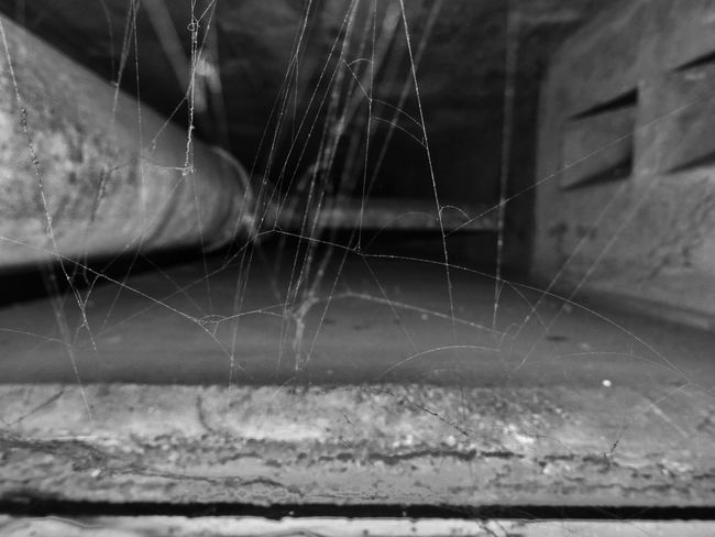 Spider Web Close-up No People Focus On Foreground Indoors  Mannheim Luftschutzkeller Abandonedplaces Abandoned Buildings Abandoned Old Buildings Military War Built Structure Bunker Mannheim Mannheim Germany Ww2 WWII Bunker Luftschutzbunker Abandoned Places Bunkers  Old Cellar Blackandwhite Black And White