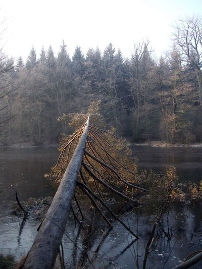Tree falling over river in forest