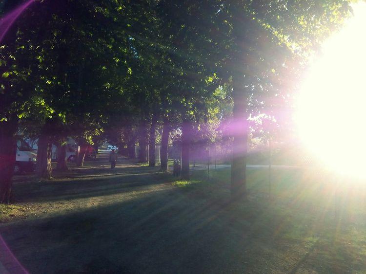 Park Caravan Park Summer2015 Trees A Ray Of Sunshine