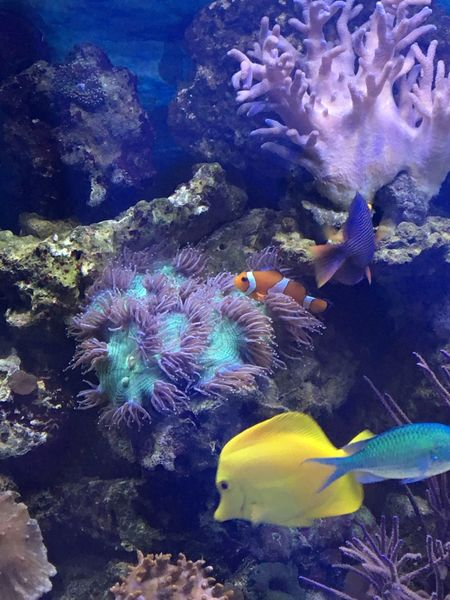 Underwater UnderSea Coral No People Sea Life Animal Themes Animals In The Wild Water Swimming Sea Nature Clown Fish Beauty In Nature Sea Anemone Day Close-up Outdoors