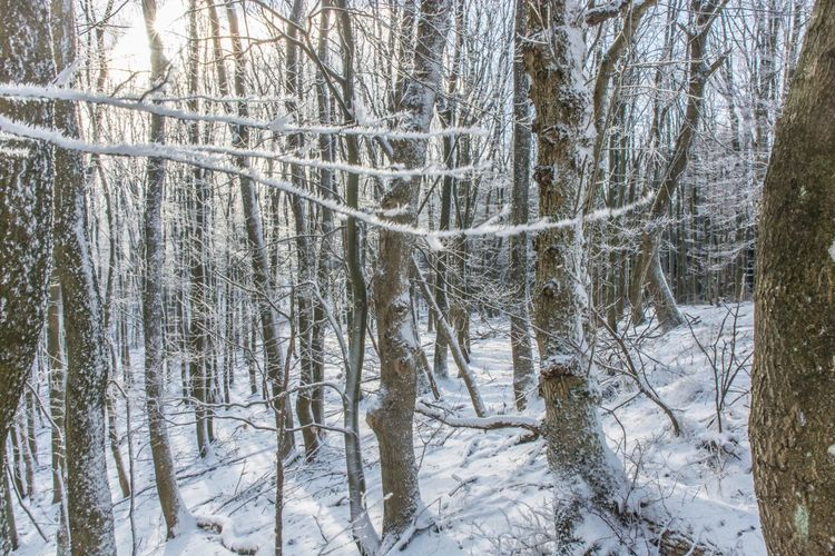 Winter Tree Nature Snow Forest Tranquility Beauty In Nature Cold Temperature No People Day Scenics Outdoors Hungary Borzsony Kéktúra Tranquil Scene Landscape