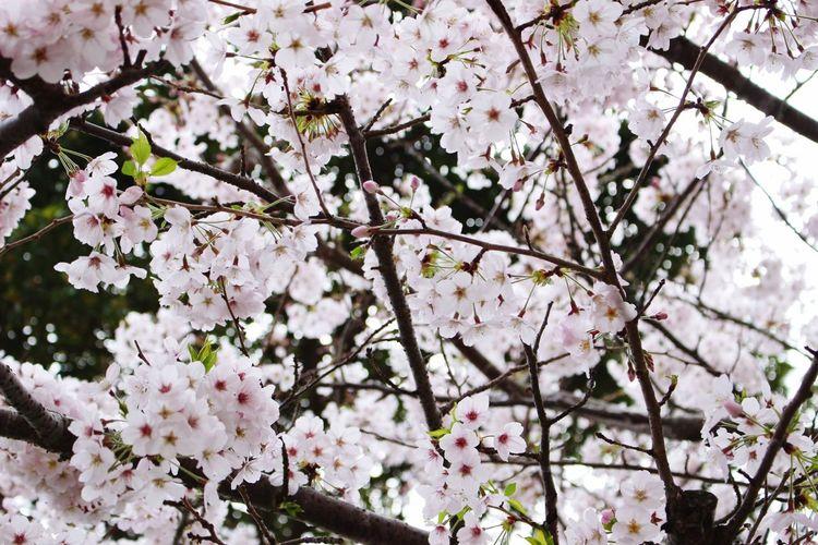 Sakura Hello World Hanging Out Taking Photos Relaxing