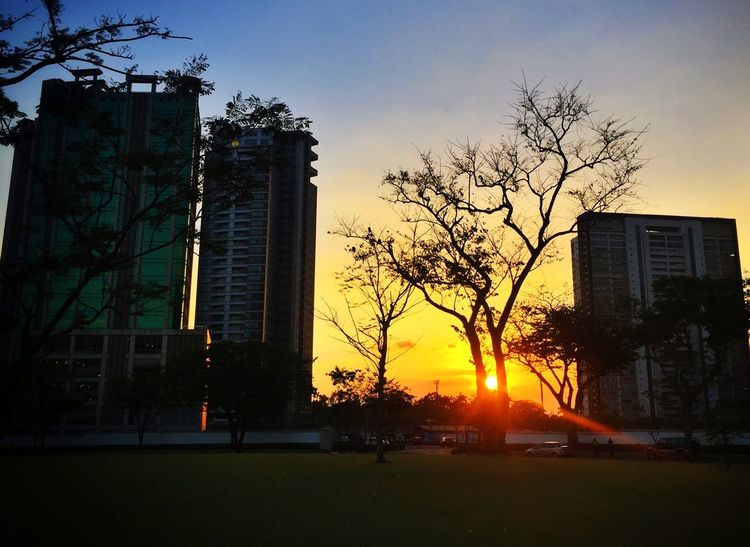 More of getting lucky! Sunset Sunset In The City  Urban Landscape Urban Nature Fresh 3 Cityscapes Eyeem Philippines Hugging A Tree Eye4photography  EyeEm Best Shots