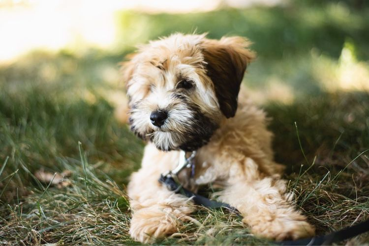 Close-Up Of Dog Relaxing On Grassy Field
