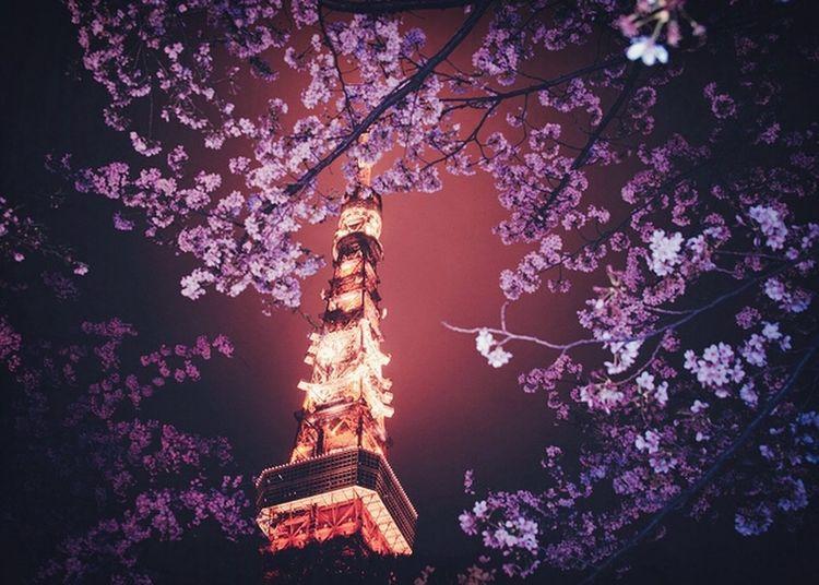 Tokyo Relaxing City Of Lights