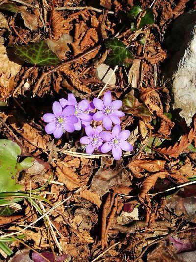 primavera #Nembro #primavera #spring #Pasqua #Easter