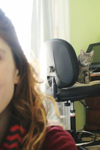 Indoors  Domestic Life Cat Domestic Cat Spy Spying Curious Curiosity Curious Cat Blur DomesticShortHairCat Watching Chair Distance