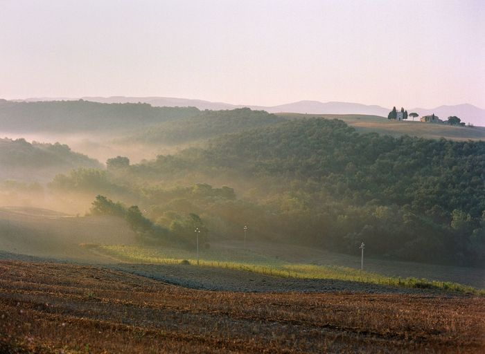 EyeEm Italy Filmphotography Tuscany Travel Destinations Scenics - Nature Environment Landscape Land Beauty In Nature Plant Tranquility Tranquil Scene Field Nature Rural Scene Agriculture Non-urban Scene Idyllic Fog