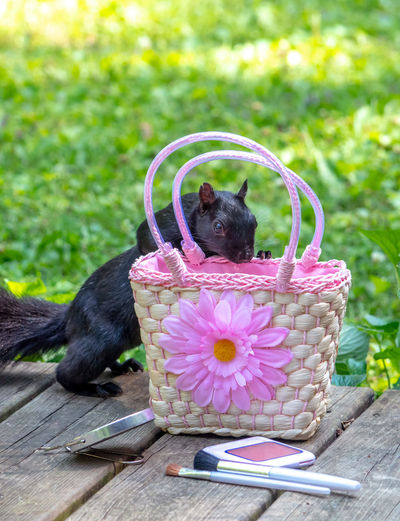Small dog in basket
