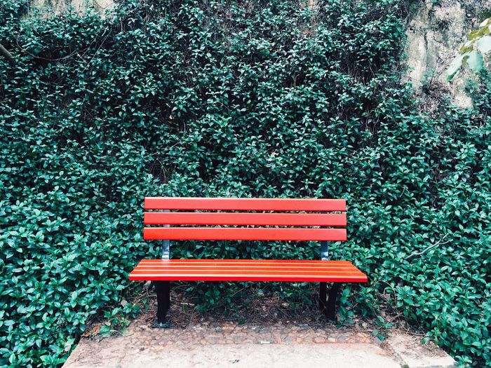 Empty Park Bench Against Ivy