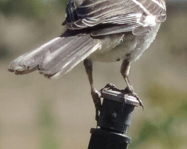 Bird Focus On