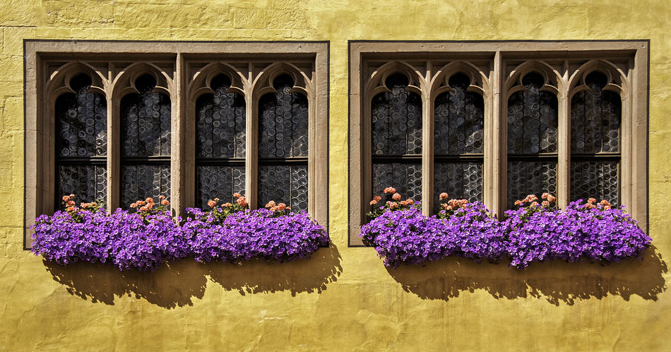 Gothic Windows and Flower boxes on ancient building in Regensburg, Germany. Window Decorations Architecture Building Exterior Flower Flower Box Flower Boxes Germany Gothic Style Gothic Window Houseplant Houseplant Flower Medieval Architecture Medieval Window No People Plant Potted Flowers Potted Plant Window Windows