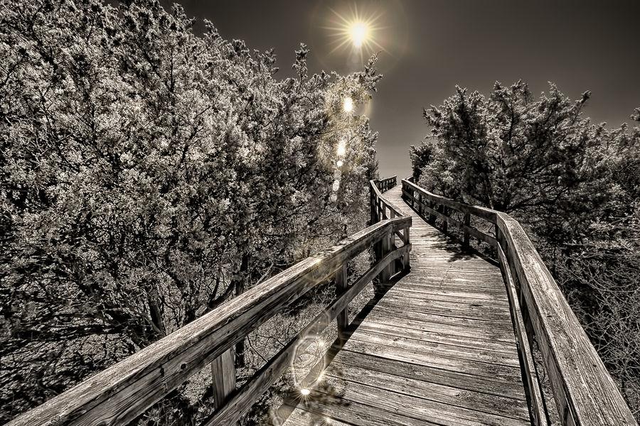 Board Walk Boardwalk Fire Island NY Fire Island Pine For Path Sun Sun Light Walkway Wooden Pathway
