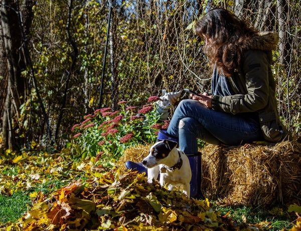 Woman relaxing outdoors in autumn day in cozy clothing sitting on haystack with cute dog Long Hair Mobile Phone Portrait Real Life Real People Beautiful Girl Hay Stack Cozy Sunshine Getting Away From It All Jack Russell Terrier Woman Plant Real People Leisure Activity One Person Lifestyles Growth Sunlight Nature Casual Clothing Tree Mammal Land One Animal Full Length Outdoors Adult Day Autumn Mood Autumn Mood