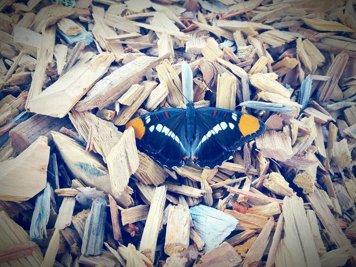 Was running down to the store and stumbled upon a tired butterfly. Butterfly Abundance Backgrounds Full Frame High Angle View Messy Wooden Day Outdoors Firewood Heap Obsolete No People Dirty First Eyeem Photo