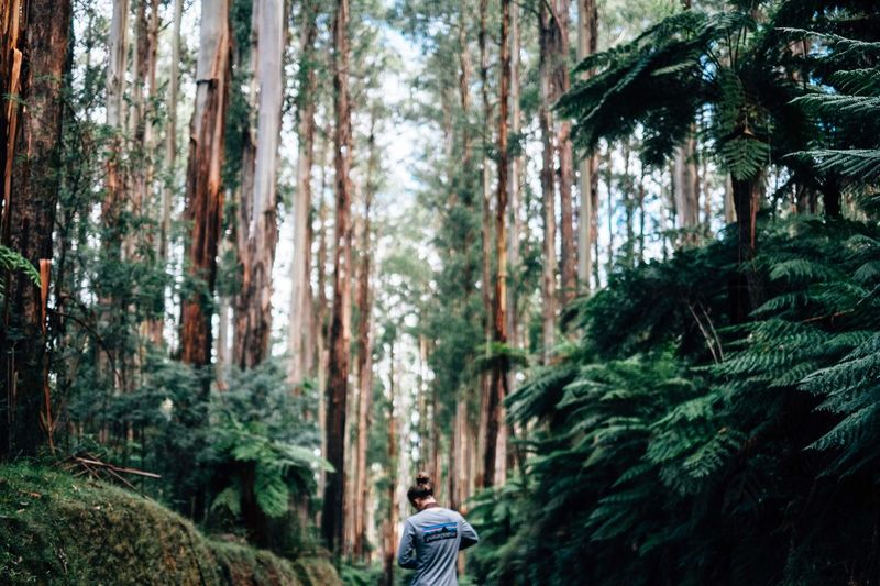 Black Spur Australia Landscape Gum Trees Trees Nature Adventure Traveling Tourism The Great Outdoors - 2016 EyeEm Awards Sightseeing Outdoors The Essence Of Summer Victoria Feel The Journey The Following Black Spur Road Eucalyptus
