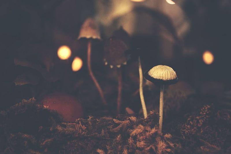 mushroom Fungus Mushroom Night No People Vegetable Growth Plant Nature Food Lighting Equipment Close-up Illuminated Focus On Foreground Land Tree Outdoors Selective Focus Food And Drink Beauty In Nature Field
