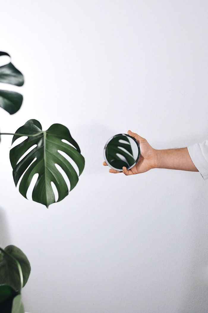 Close-up of woman hand holding mirror by plant against white background