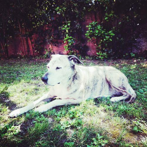 Pets Tree Dog