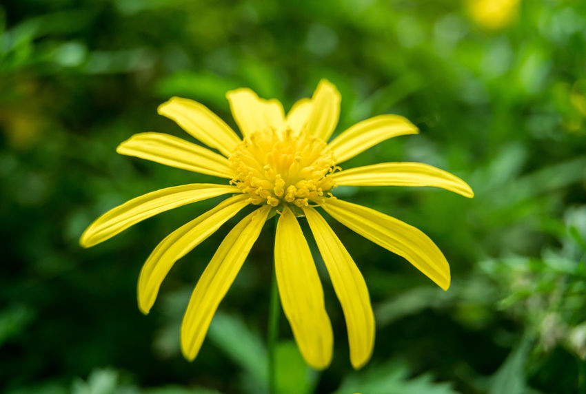 Beauty In Nature Blooming Close-up Day EyeEm Gallery Flower Flower Head Focus On Foreground For Love Of Photography Fragility Freshness Growth Nature No People Outdoors Petal Plant Pollen Springtime Yellow Yellow Flower