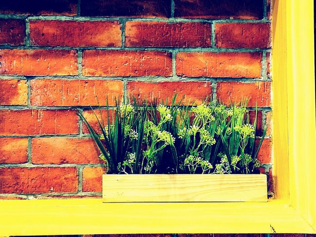 Plant Brick Wall Built Structure No People Green Color Growth Architecture Day Outdoors Building Exterior Leaf Ivy Nature
