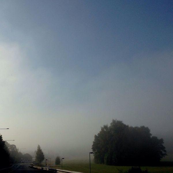 We are having misty mornings these days. Morning Mist Mist Nature Good Morning