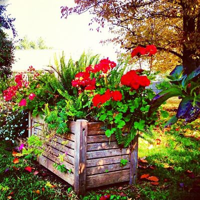 #Fall still in bloom, mid-winter #flowers #bed Sky Beauty Green Tree Bed Fall Red Day Clouds Flowers Pretty Sun Photooftheday Nature Iphonesia Skypainters Weather Skylovers Light Mothernature Beautiful