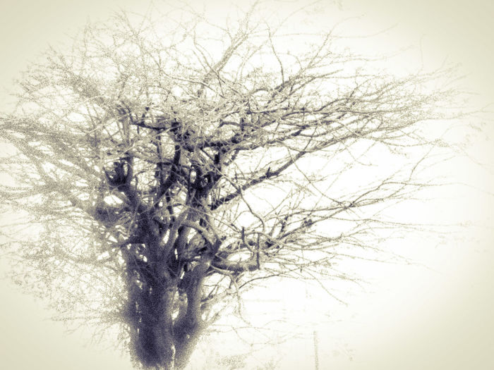 Some play with edit.. Hanging Out Taking Photos Check This Out That's Me Hello World Cheese! Relaxing Hi! Enjoying Life Showcase July Traveling Summer Fine Art Photography Incredible India Trees Tree Dryness Dry Tree Tree And Sky Trees And Sky Hope Dry Leaves Monochrome Photography