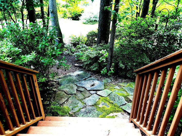 Down to the Garden Outdoors Nature Tranquility Front Or Back Yard Beauty In Nature Landscape Tree Garden Architecture Moss Stone Pathways