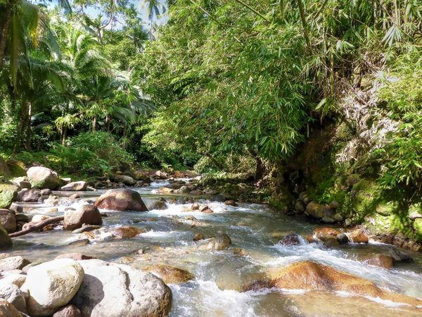 Mainit Hot spring Brook Beauty In Nature Day Forest Growth Nature No People Outdoors Plant River Rock - Object Rocks Scenics Tranquil Scene Tranquility Tree Water