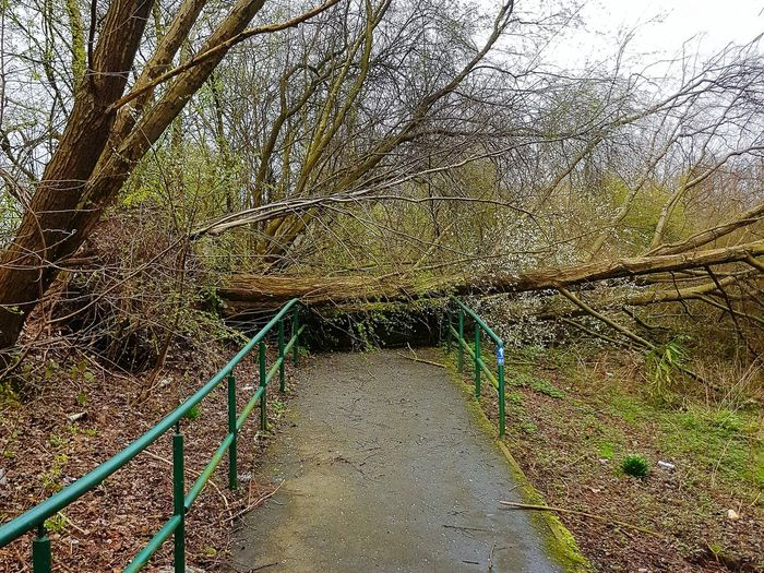 """""""No entry"""" Tree No People Day Outdoors Nature Beauty In Nature Fallen Tree Blocked Path Close-up Sky Wind Power Manchester Scenics"""