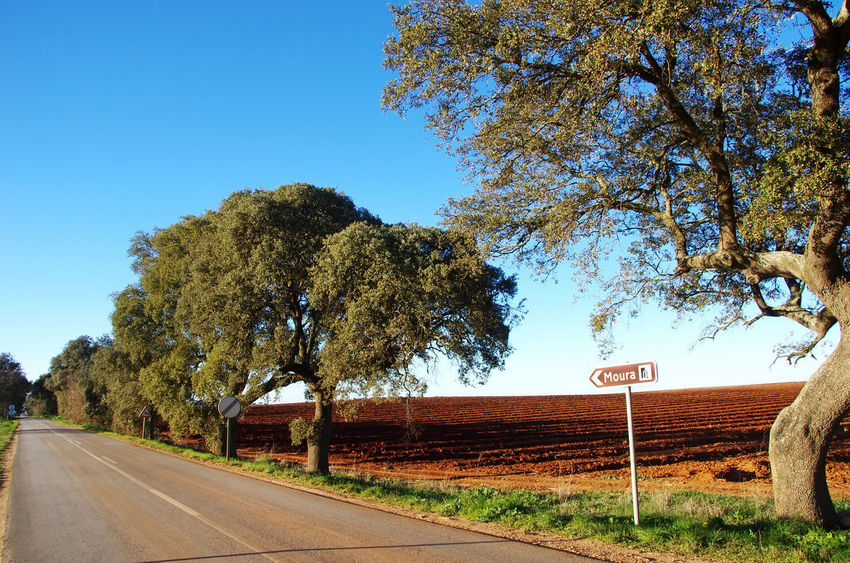 Road in Alentejo region, south of Portugal Road In Alentejo Clear Sky Communication Direction Guidance Nature No People Road Road Sign Sky South Of Portugal Speed Limit Sign The Way Forward Tranquil Scene Tranquility Transportation Tree