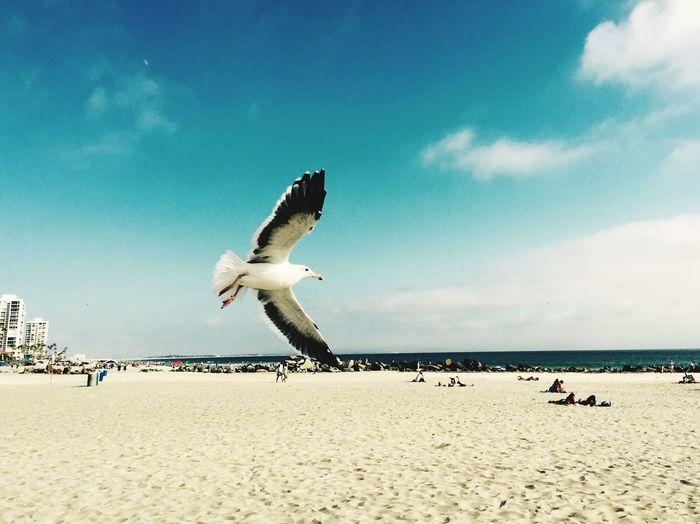 Seagull flying over beach